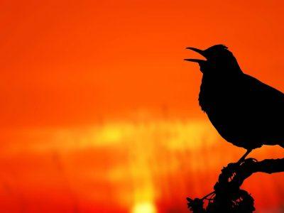 bird-2037129_1920